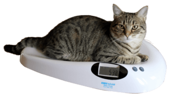 MTB Veterinary Scale